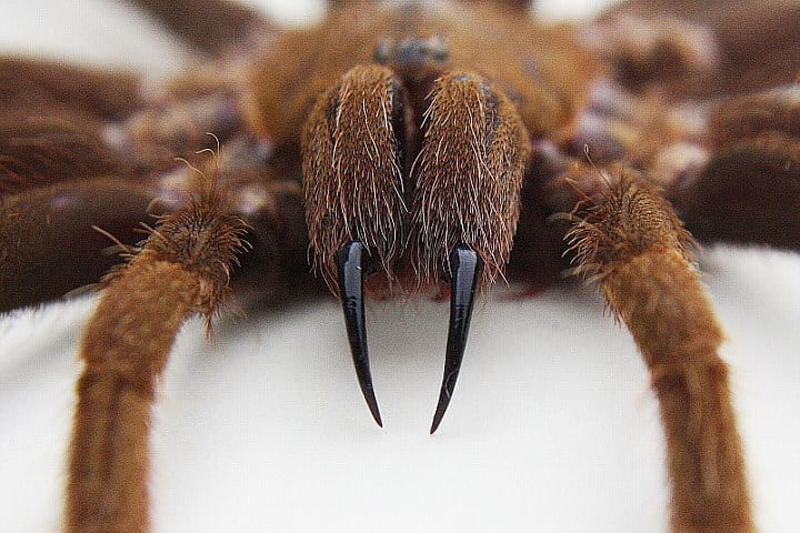 The Worlds Deadliest Spiders That Are Closer Than You Think