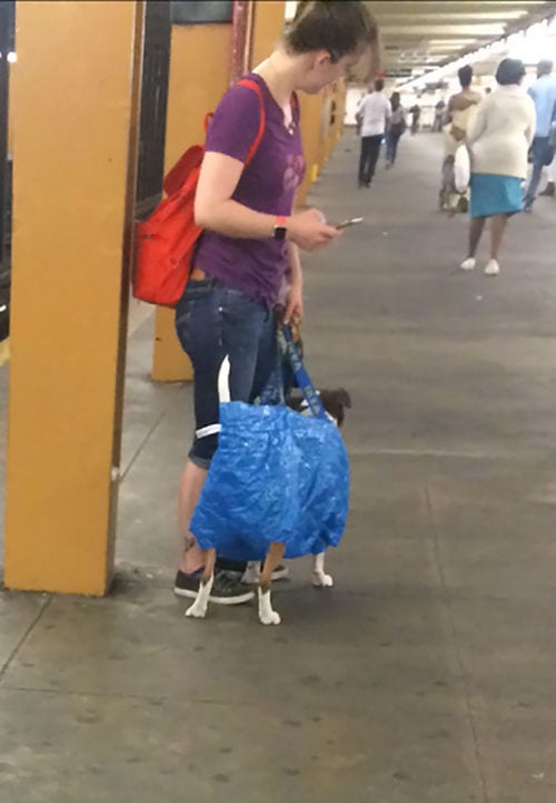 Hilarious Anti Social Commuters Caught On Camera